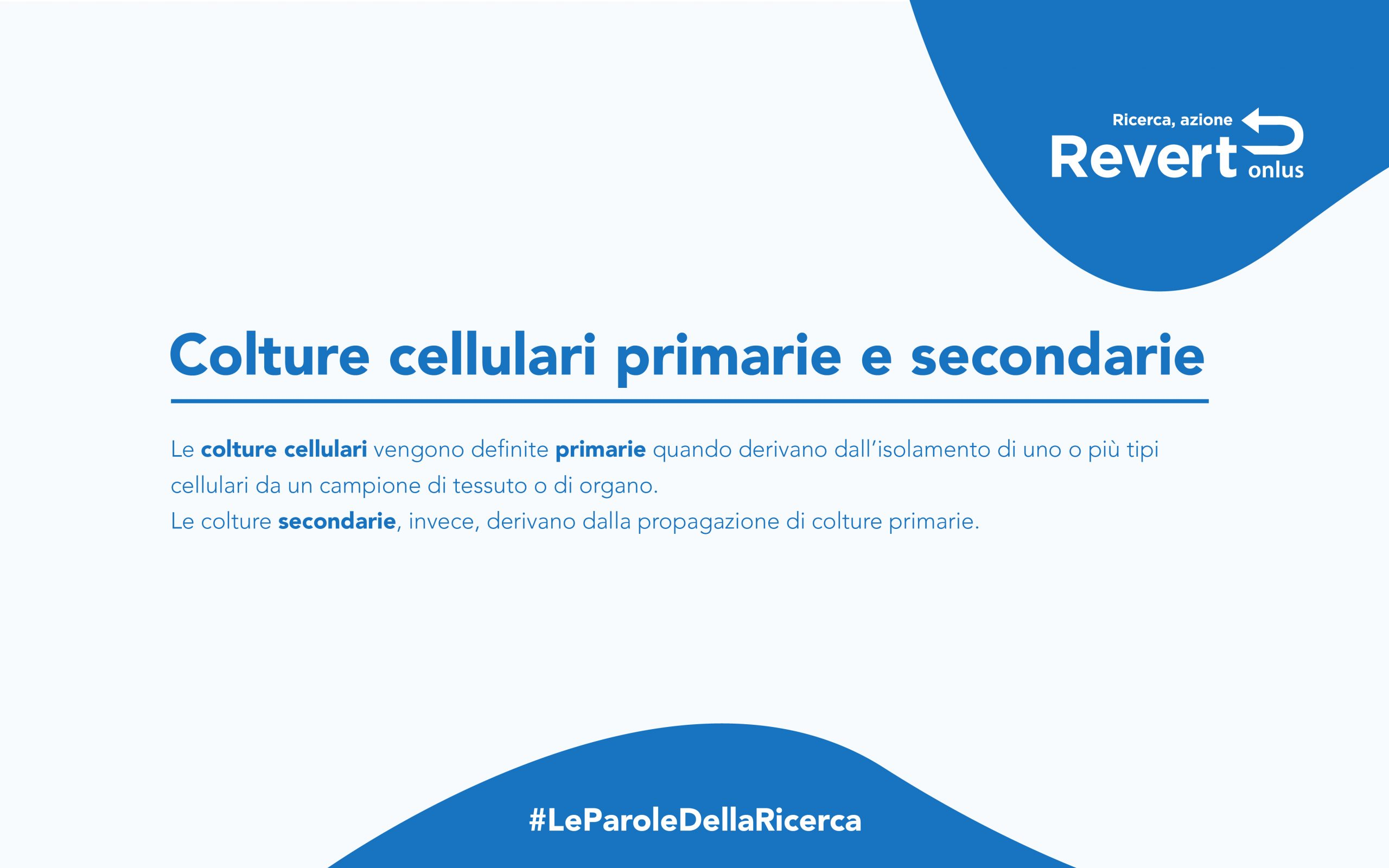 culture cellulari primarie secondarie